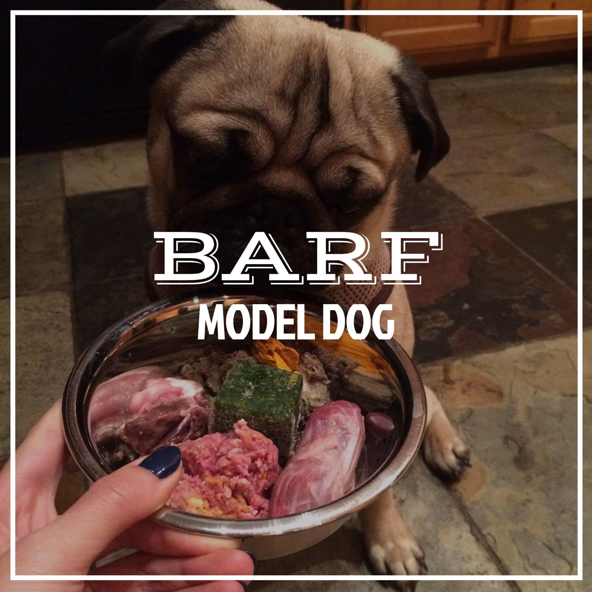 barfdogmodel