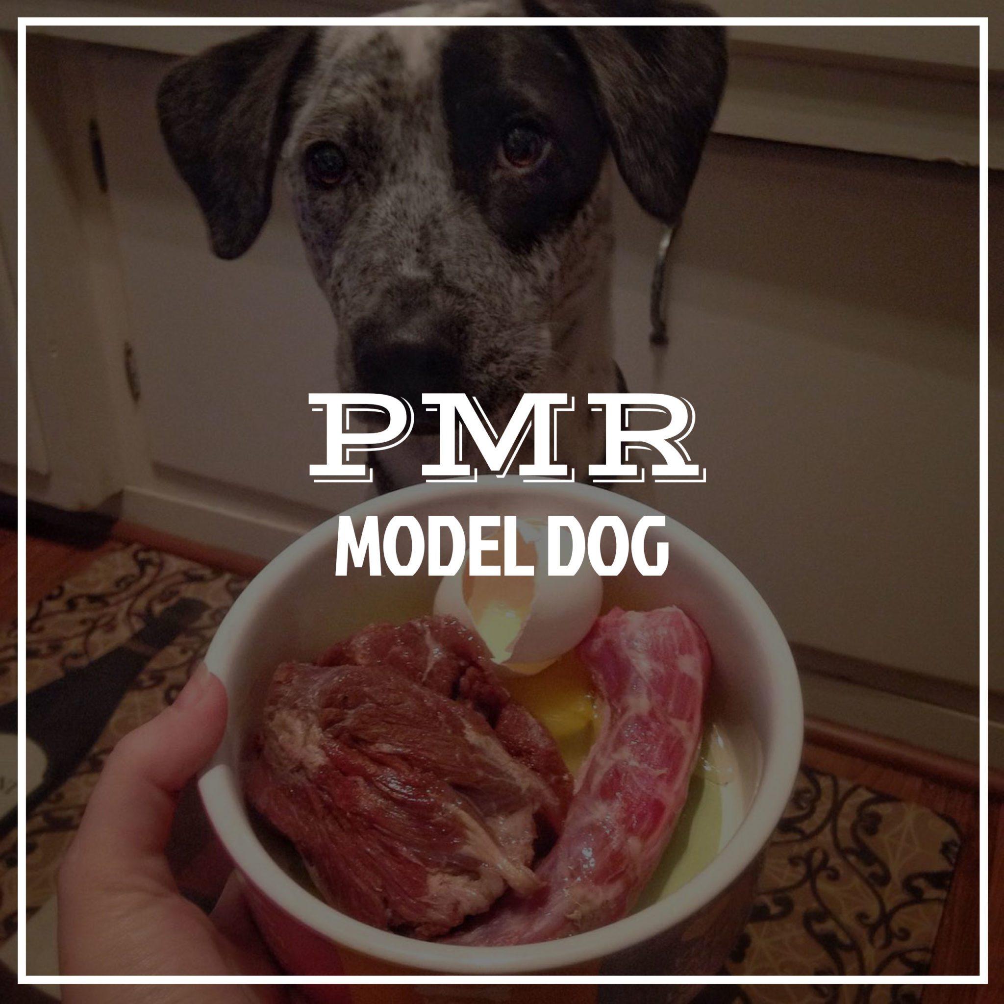 pmrdogmodel
