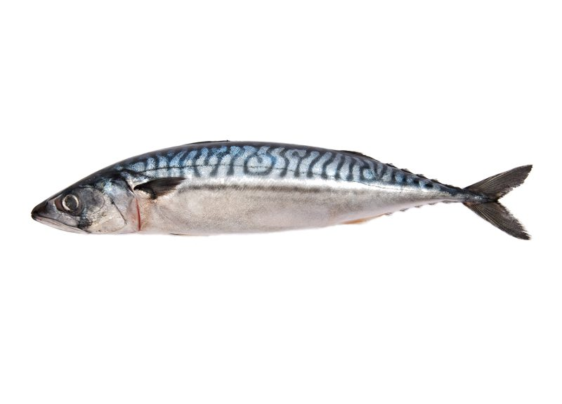 atlanticmackerel