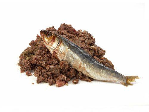 feeding raw oily sardines to dogs