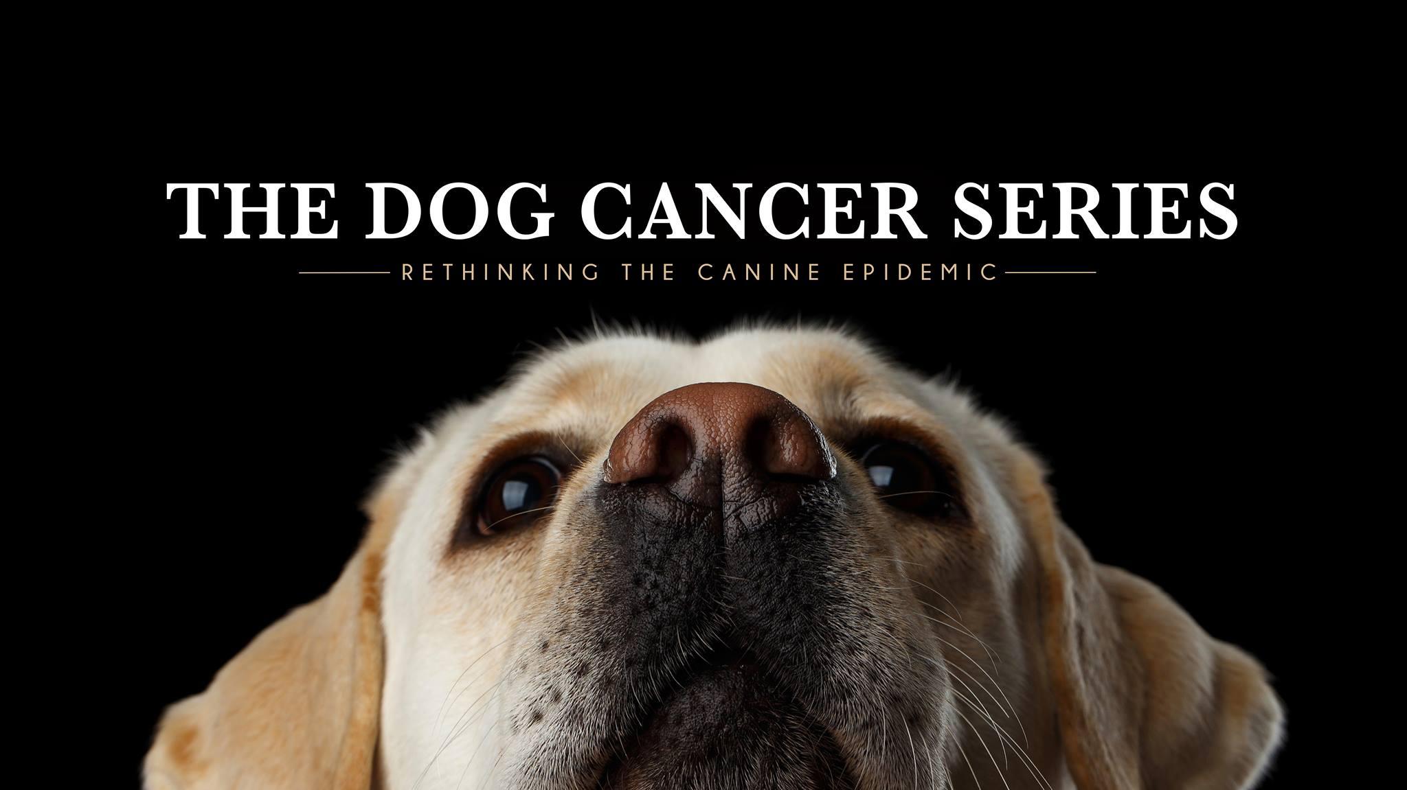 dogcancerseries