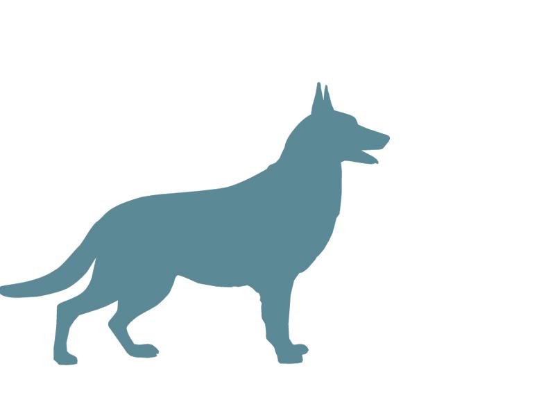 largedogbreeds