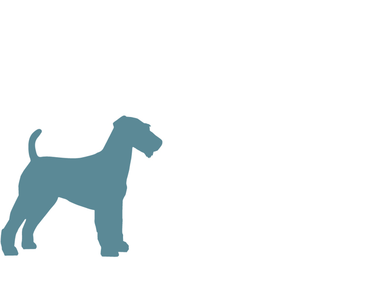 mediumdogbreed