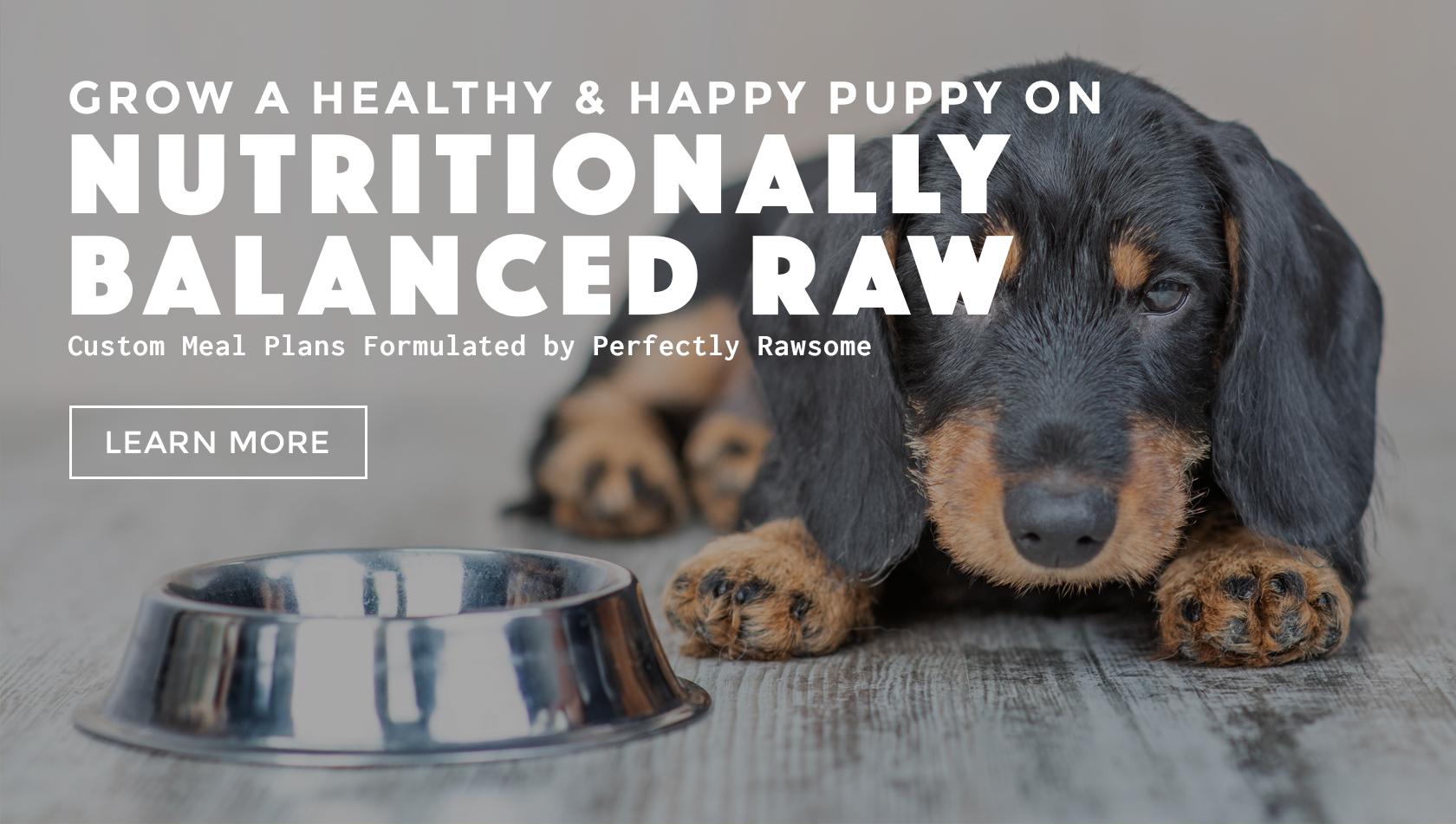 puppyrawbalancedmeal