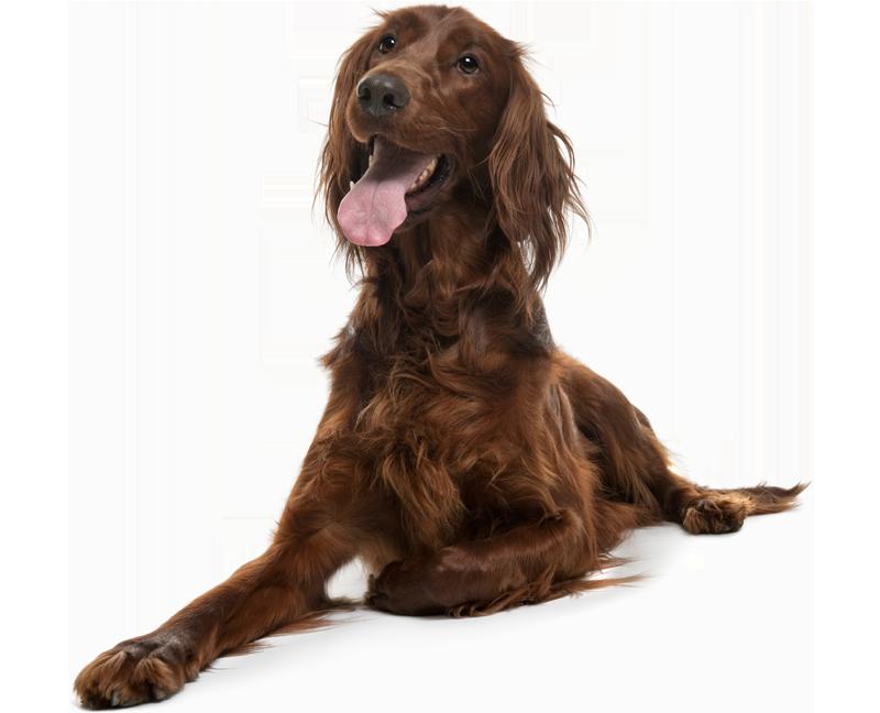 rawfedadultdog
