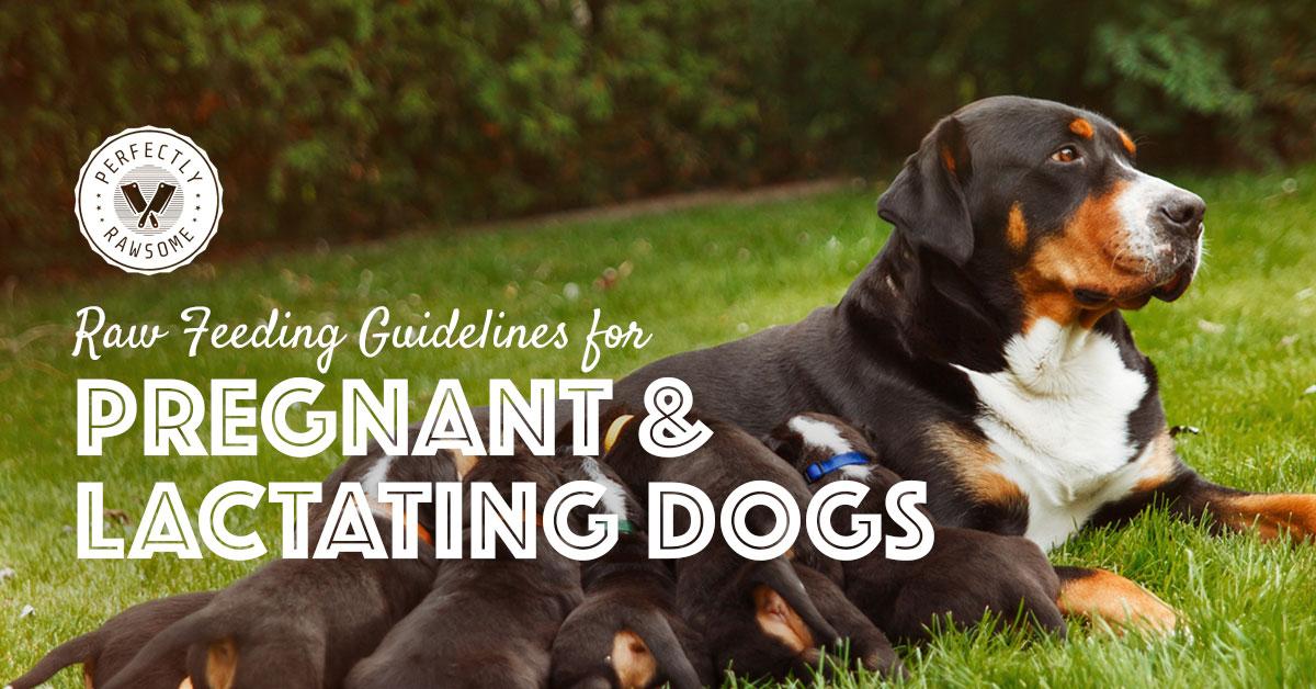 Gestating & Lactating Dog Nutritional Requirements