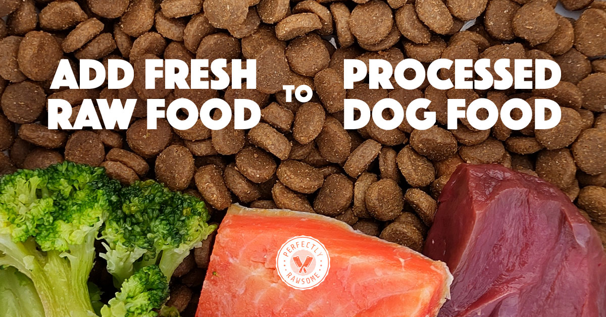 Introduce Fresh Food to Adult Dogs